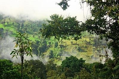 deforestation ecuador