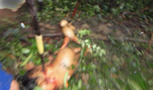 massacre yasuni uncontacted